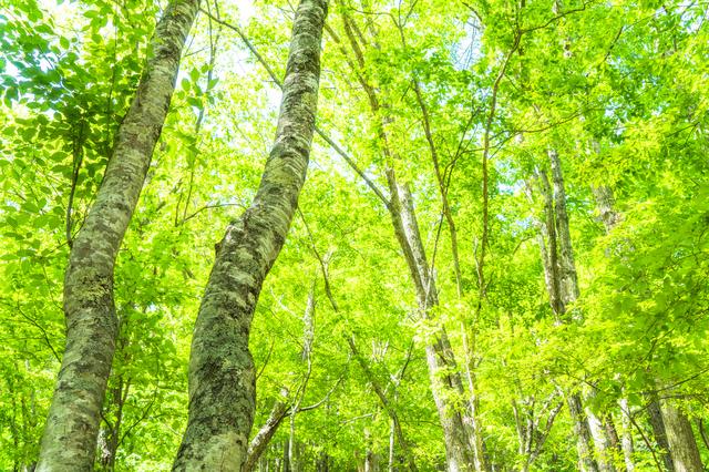 自然の木々